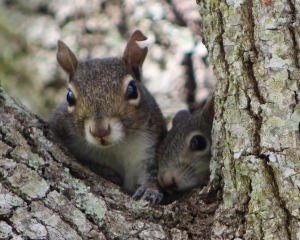 squirrels-2