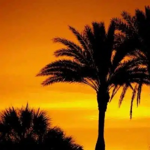 free palm tree pix